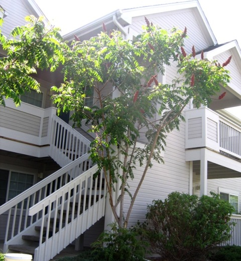Multi-Family Property - Exterior Painting